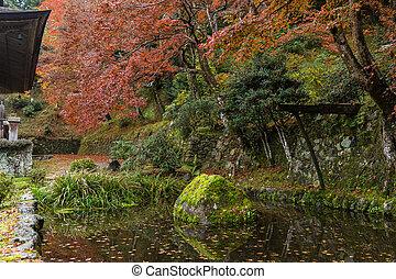 Japanese park in autumn season