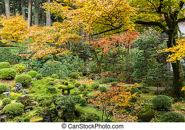Japanese park with colourful maple tree