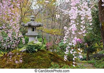 Japanese park with sakura tree