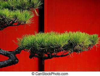 Japanese pine tree against the red wall