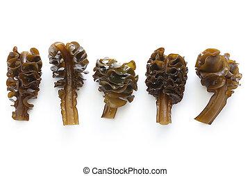 japanese seaweed, mekabu, wakame ro