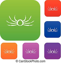 Japanese spider crab set color collection