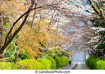 Japanese spring colors