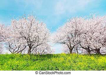 Japanese spring scenics
