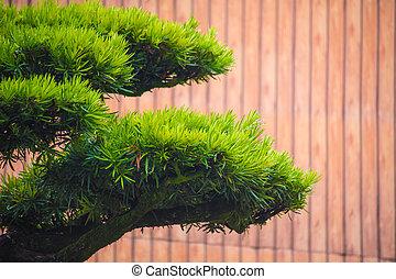 Japanese style tree wood for background.