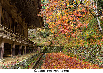 Japanese temple and maple tree