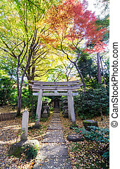Japanese Traditional Temple in Autumn Garden