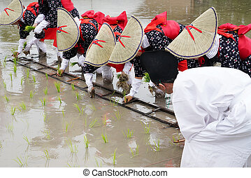 Japanese young girls plants in a rice paddy