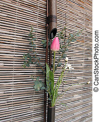 japanisches , frühlingsblume, anordnung