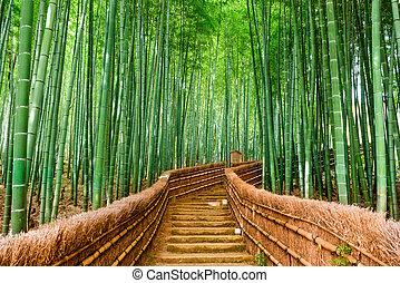 japon, forêt bambou, kyoto