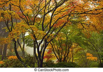 japonaise, arbres, 2, automne, baldaquin, érable