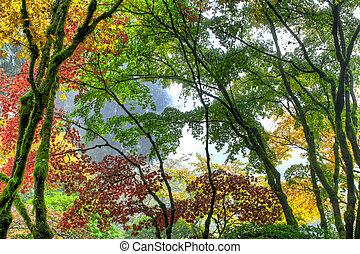 japonaise, arbres, 3, automne, baldaquin, érable