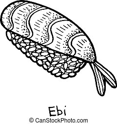 japonaise, illustration, sushi, seafood., nigiri, illustration., rice., -, crevette, vecteur, ebi, croquis
