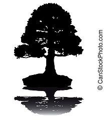 japoneses, bonsai, silueta, árvore