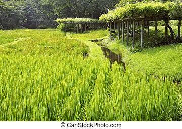 japoneses, paisagem