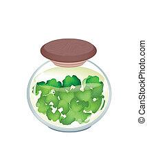 Jar of Gotu Kola Tea with Pandan Leaves - An Illustration of...
