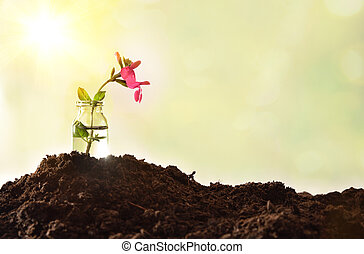 Jar with plant with red flower on soil nature background