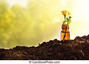 Jar with plant with yellow flower on soil nature background
