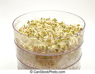 Jar with sprouting vegetable