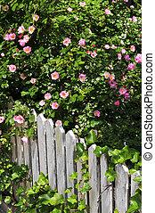 jardín, cerca, con, rosas