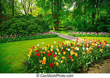jardín, en, keukenhof, tulipán, flores, y, árboles., países bajos