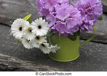 jardín, flores, en, un, regadera