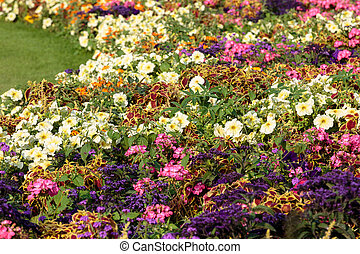jardín, lleno, parís, arriate, luxemburgo, francia, flores