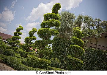 jardín, paisaje