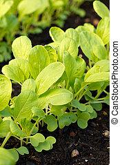 jardín, planta, plantas de semilla