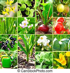 jardín vegetal, colección