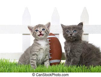 jarda, gatinhos, futebol, costas, dois, pequeno, verde, bebê senta-se, capim