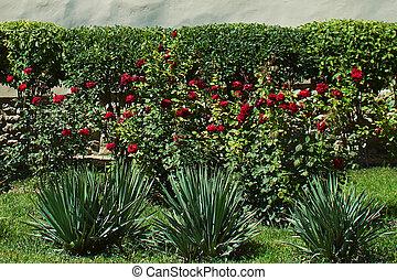 jardim, bonito, rosas
