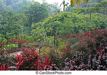 jardim botânico, cingapura