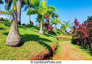 jardim, palmas, havaí, éden, tropicais, maui
