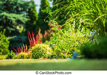 jardim, plantas, closeup