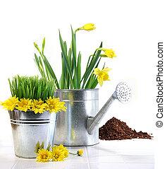 jardim, pote, com, capim, margaridas, e, lata molhando