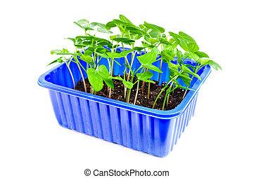 jardim, seedlings