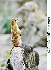 jardim zoológico, animais