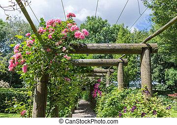 jardin d'agrément, pergola, rosa