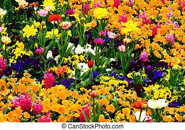 jardin, entiers, de, fleurs