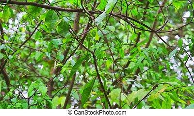 jardin, entre, en mouvement, oriental, whipsnake, feuilles