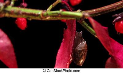 jardin, escargot