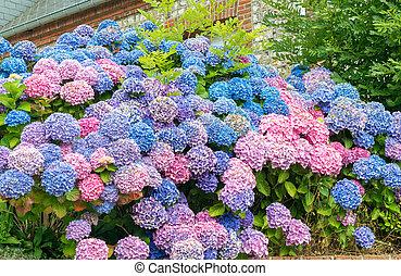 jardin fleur, composition