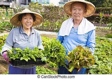jardin, fonctionnement, légumes, couples aînés, heureux