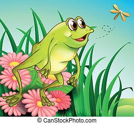 jardin, grenouille, affamé