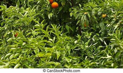 jardin, haut, arbres, foyer, sélectif, orange, fin