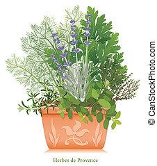 jardin herbe, de, provence, pot fleurs