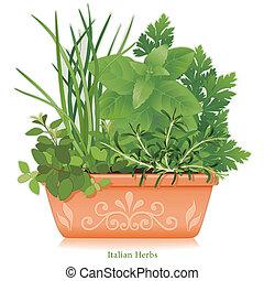 jardin herbe, pot fleurs, italien, argile