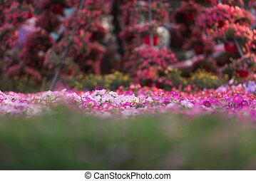 jardin, miracle