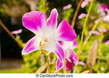 jardin, orchidée